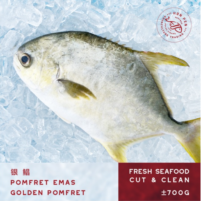 2 pcs GOLDEN POMFRET 银鲳 POMFRET EMAS (Seafood) ±700g
