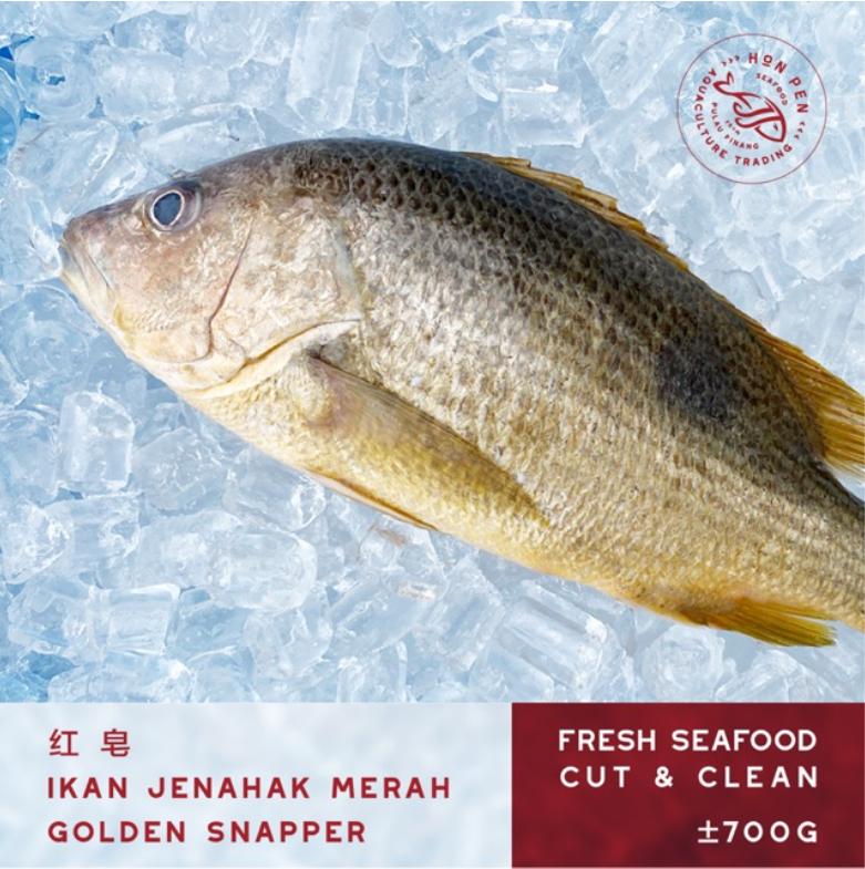 GOLDEN SNAPPER 红 皂 IKAN JENAHAK MERAH (Seafood) ±700g