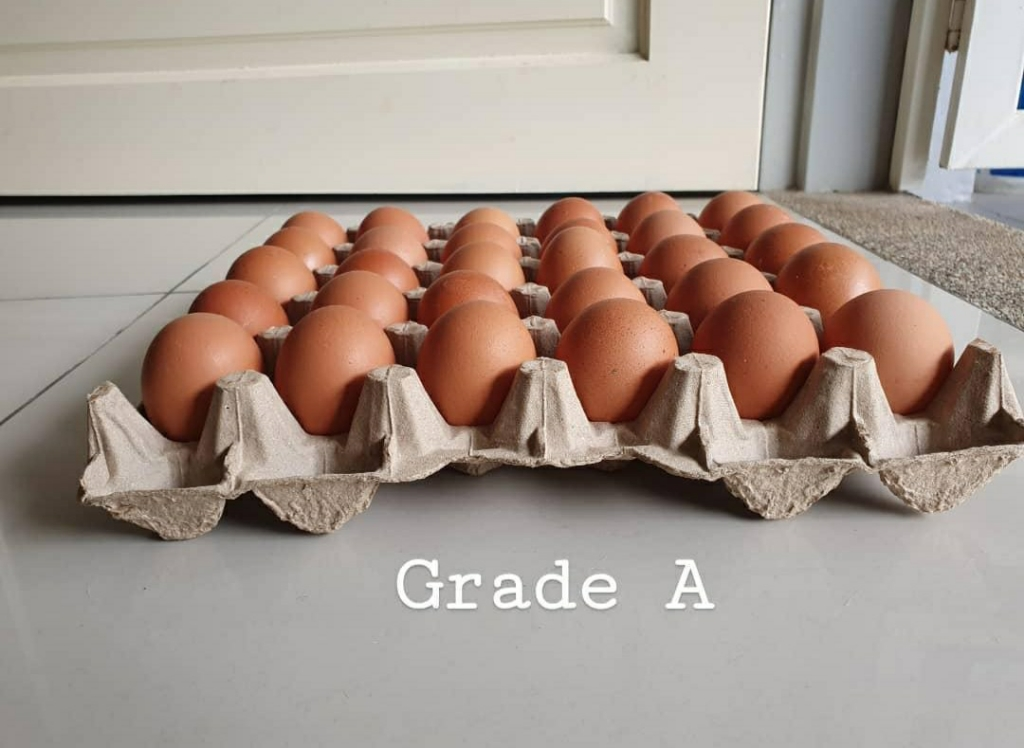Fresh from Farm Grade A eggs